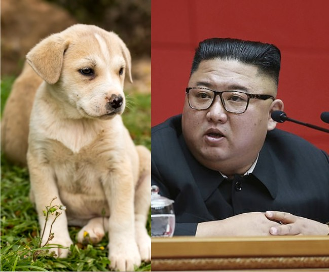 North Korea S Food Crisis Citizens Ordered To Submit Pet Dogs For Meat The Maravi Post